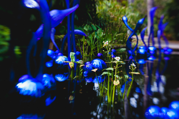 Dale Chihuly @ Fairchild Tropical Botanic Garden